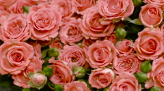 Big Bouquet of Pink Roses Stock Footage
