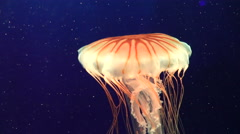Jellyfish Changing Color Stock Footage