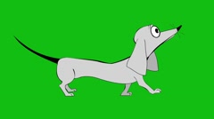 Dachshund breed dog Animation Stock Footage