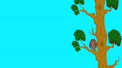 Stock Video Footage of owl on the tree. Owl sleeping in a tree, wakes up and flies away.