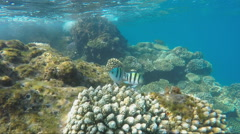 Many exotic fish in the surf zone Stock Footage