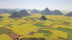 Rapeseed flowers of Luoping in Yunnan China - stock footage