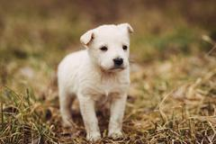Young puppy waits for master outdoor Stock Photos