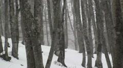 Forest of beech trees, Vallefiorita Stock Footage