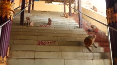 Monkeys on stairs of Popa hill monastery - Myanmar Stock Footage