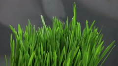Growing Green Grass Stock Footage