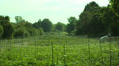 Farm Ready for Beans to Grow wide shot Stock Footage