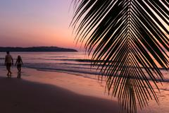Tropical sunset over palm tree - stock photo