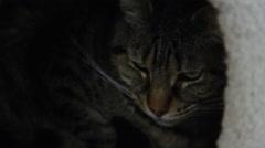 Sad cat hiding in a dark nook Stock Footage