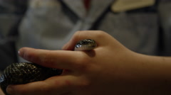Young woman holding grey snake Stock Footage