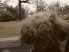 Vintage Style Small Dog Looking Out Car Window 8mm Stock Video Stock Footage