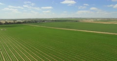 Agriculture Green field from Aerial shot. Stock Footage