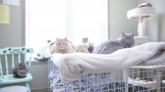 Stray cats at animal sanctuary waiting to be adopted Stock Footage