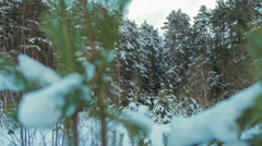 Beautiful Snow-Covered Fir Branches Stock Footage