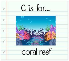 Flashcard letter C is for coral reef - stock illustration