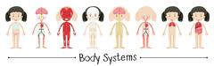 Body systems of human girl - stock illustration