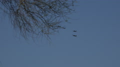 4K UHD vintage T-6 Texan fighter 4 pack formation fly behind tree Stock Footage