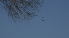 Vintage T-6 Texan fighter 4 pack formation fly behind tree Stock Footage