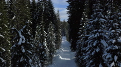 Aerial - Snowy, empty road in forest Stock Footage