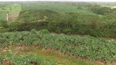 Aerial shot above banana plantation. Ecuador Stock Footage
