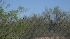 HD blackhawk comes in for landing behind shrubs trees fence Stock Footage