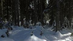 Aerial - Flight inside snowy forest Stock Footage