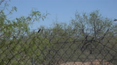 4K UHD blackhawk comes in for landing behind shrubs trees fence Stock Footage