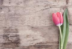 Flower Tulip on the background of old wood postcard Stock Photos