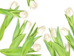 Bouquet of white tulips. EPS 10 - stock illustration