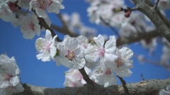 Stock Video Footage of Spring flowers blooming. Slow motion