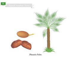 Phoenix Palm, A National Tree of Saudi Arabia Piirros