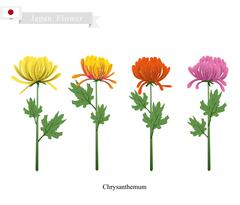 Chrysanthemum Flowers, The National Flower of Japan - stock illustration