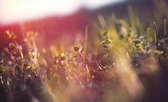 Abstract defocused spring grass with sunlight Stock Photos