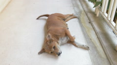 Young wild dog sleeping on the ground so cute Stock Footage