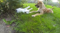 Cat vs Dog playing Stock Footage
