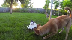 Cat vs Dog, funny fight - stock footage