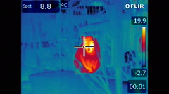 Night cats - Flir Thermal Video - stock footage