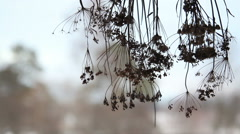 Dry bouquet hanging on the porch. - stock footage