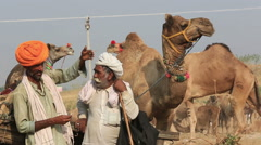 Camel dealer chatting about the sale performance in Camel Fair,Pushkar Stock Footage