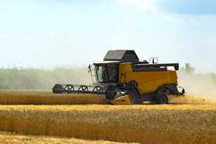 Kombain collects on the wheat crop. Agricultural machinery in the field. Stock Photos