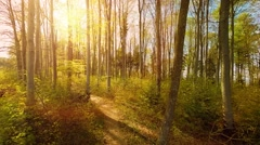 Nature Background. landscape scenery. natural environment fauna and flora Stock Footage