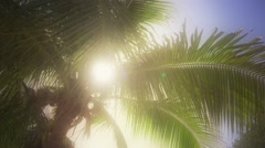 Florida Palm Tree In Summer Breeze Stock Footage
