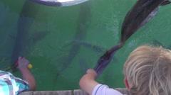 Boy Feeding Tarpon Fish At Dock Stock Footage