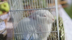 Rabbit in a cage Stock Footage