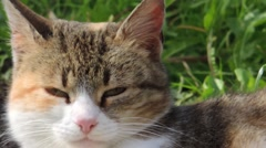 Head detail of domestic cat that lying in the garden Stock Footage