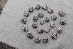 The shells of snails on a linen cloth Stock Photos