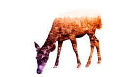 Double Exposure of Deer with Cityscape and Building - stock photo