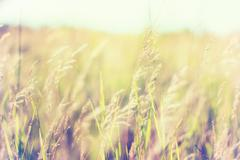 Warm vintage blurry photo of summer meadow at sunset. Stock Photos