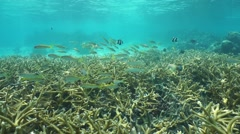 Underwater coral and fish French Polynesia - stock footage