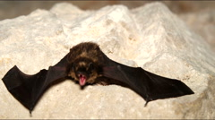 Roosting bats in the cave Stock Footage
